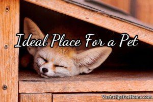 Ideal Place For a Pet According to Vastu Shastra